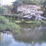 Cherry blossoms over a rippling pond