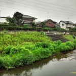 """Photo of the equivalent of """"Parks & Rec"""" in Tokyo clear away growth along the river."""