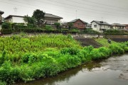 "Photo of the equivalent of ""Parks & Rec"" in Tokyo clear away growth along the river."