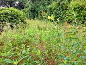 Photo of overgrowth along the Tsurumi River.